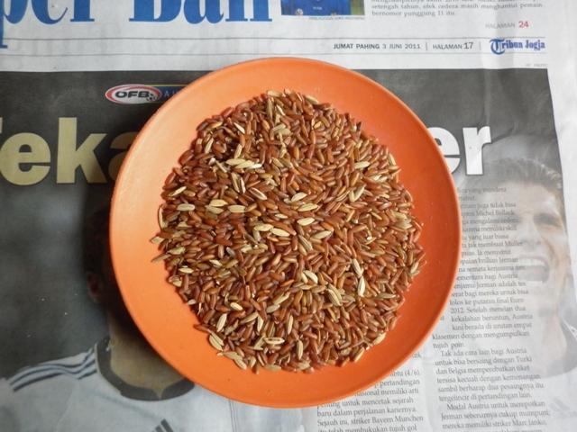 Tag: lauk yang cocok untuk beras merah saat diet