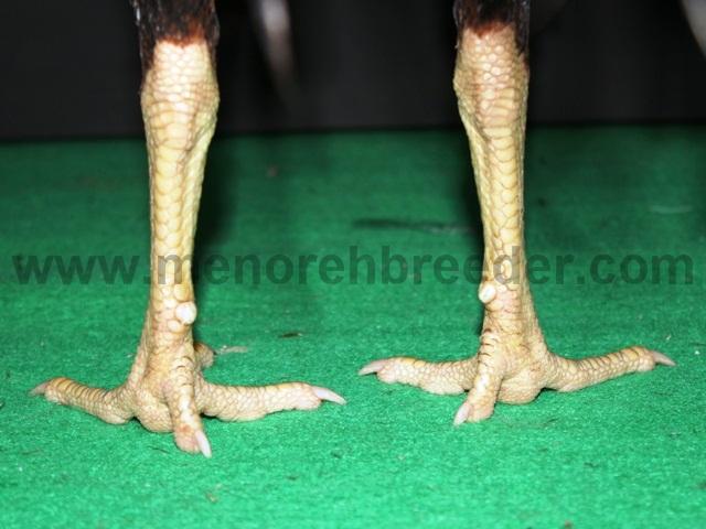 kaki belakang(1)