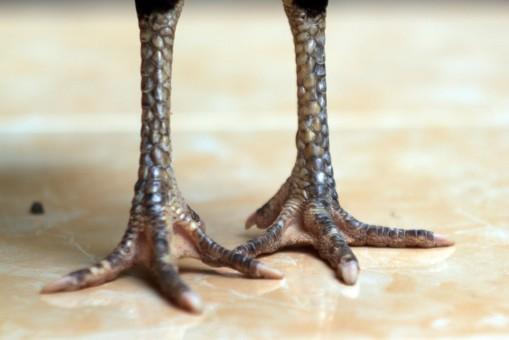 kaki dp