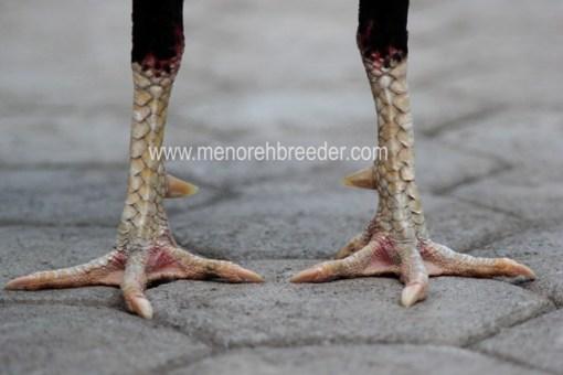 foto kaki ayam bangkok