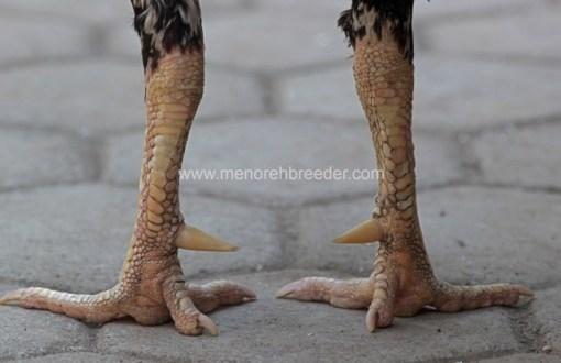 kaki ayam bangkok