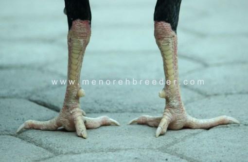 kaki ayam birma bangkok saigon pakhoy assell