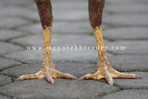 fot kaki ayam aduan bangkok
