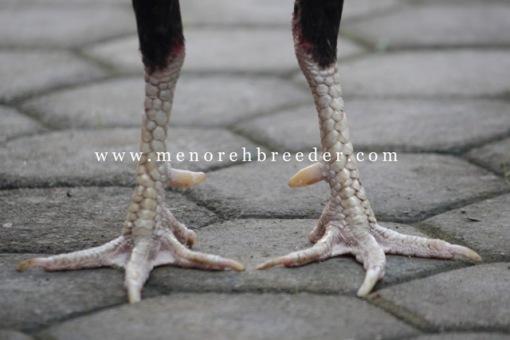 kaki ayam aduan super kering sisik katuranggan