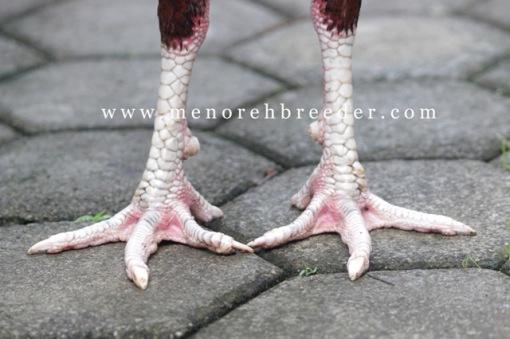 kaki ayam bangkok viaetnam
