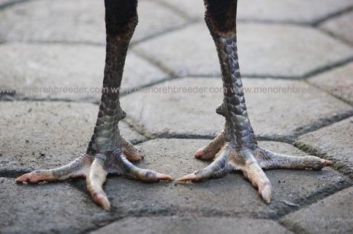 kaki ayam birma bangkok saigon mathai
