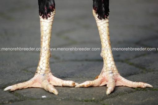 foto kaki ayam bangkok birma