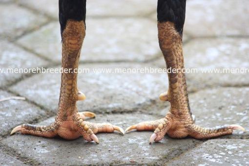 sisik kaki naga temurun