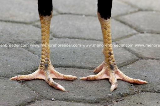kaki bangkok