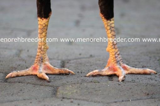 kaki ayam bangkok super