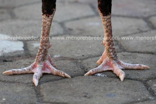 kaki ayam bangkok sisik naga