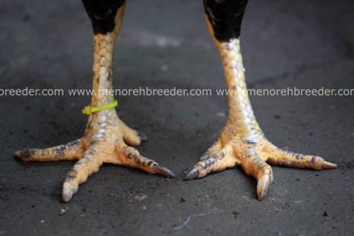 kaki birma