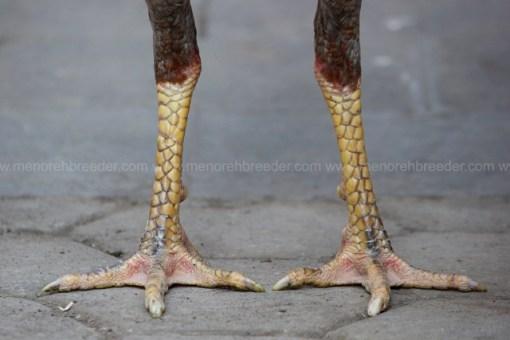 kaki bulat rotan