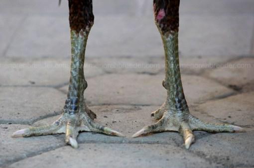 kaki hijau