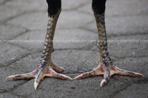 kaki pukul sakit