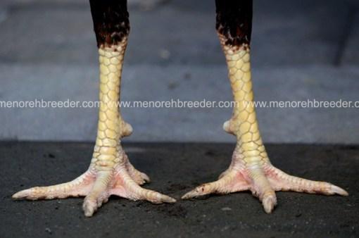 kaki rotan