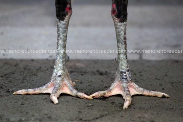 kaki super