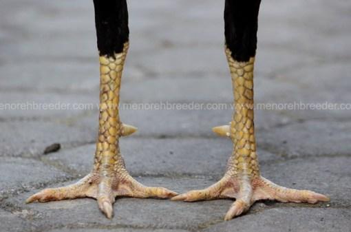 kaki pukul ko