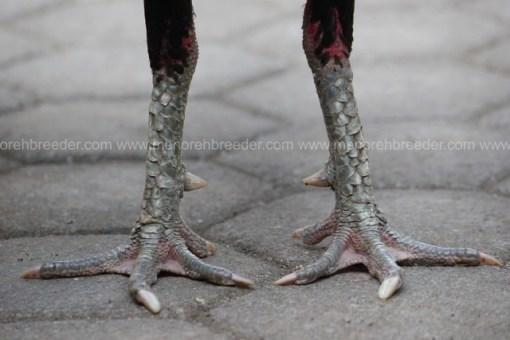 kaki pukul syaraf