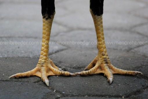 kaki wiring kuning