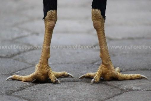 sisik kaki wiring kuning