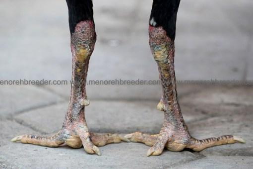 sisi kaki katuranggan.