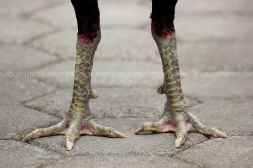 sisik kaki hijau