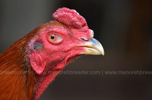 kepala ayam mathai
