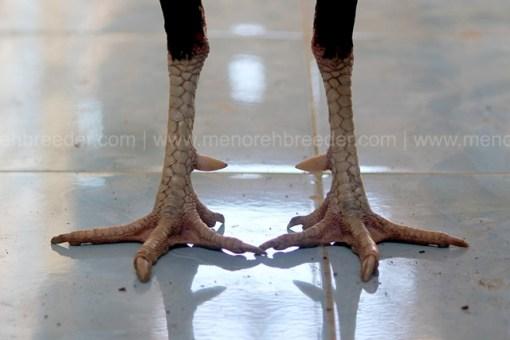 kaki rakuti