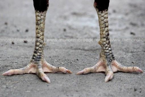 sisik kaki kering ayam bangkok