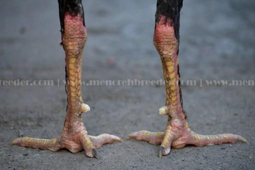 sisik kaki ubet