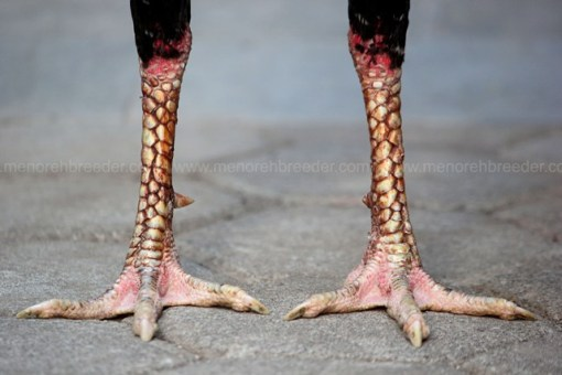 kaki berlumuran darah