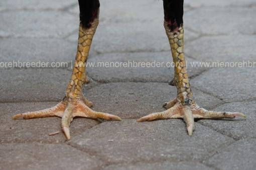 sisik kaki kering
