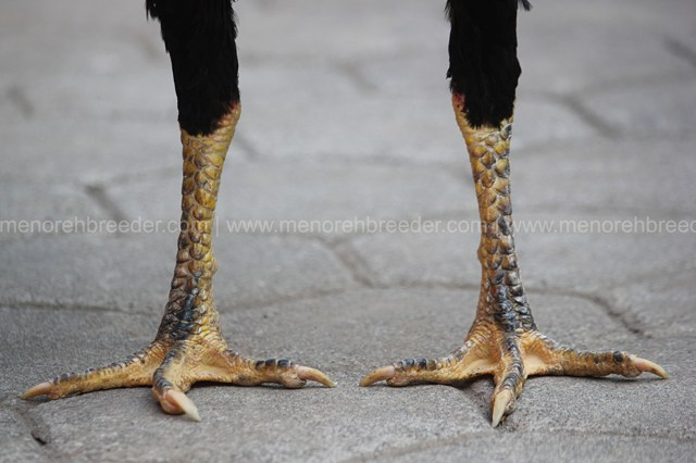 kaki ayam aduan kering