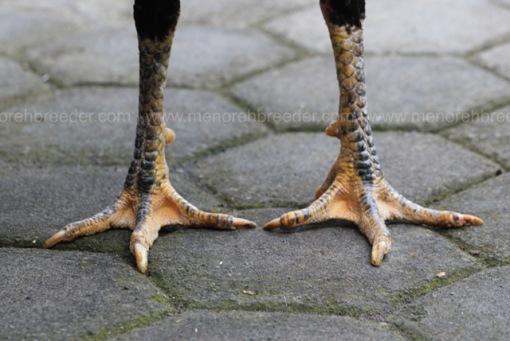 kaki kering