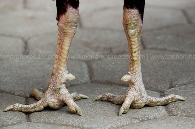 kaki sisik katuranggan