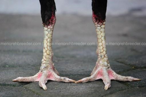 kaki ayam bangkok pukul sakit