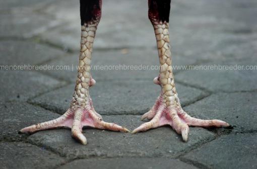 kaki jumakir