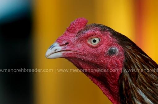 kepala ayam mathai super