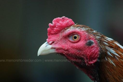 kepala ayam pakhoy super