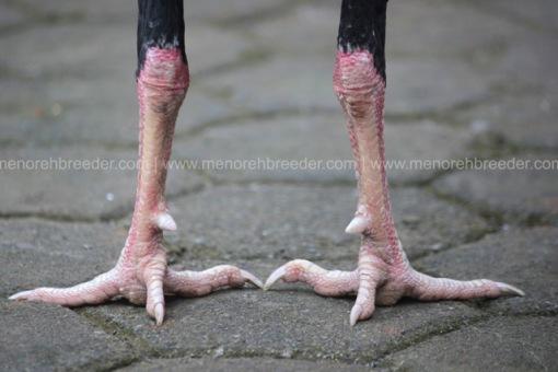 kaki jalu jahat