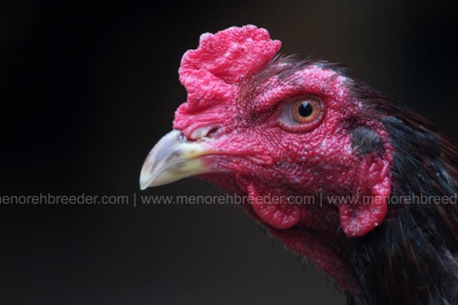 kepala ayam mangon