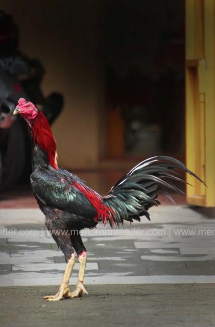 ayam mathai