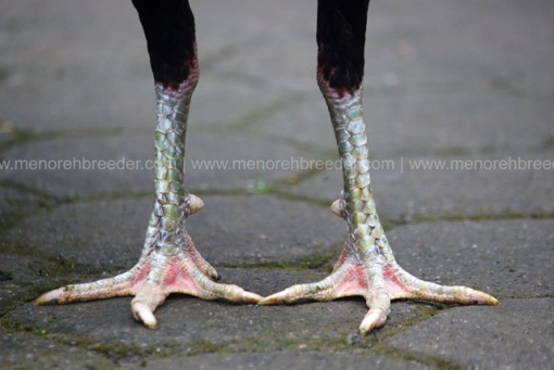 kaki kering pukul sakit