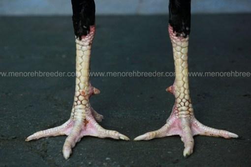 kaki ayam super.