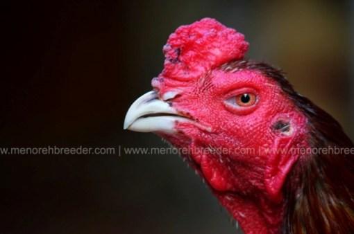 ayam aduan super istimewa
