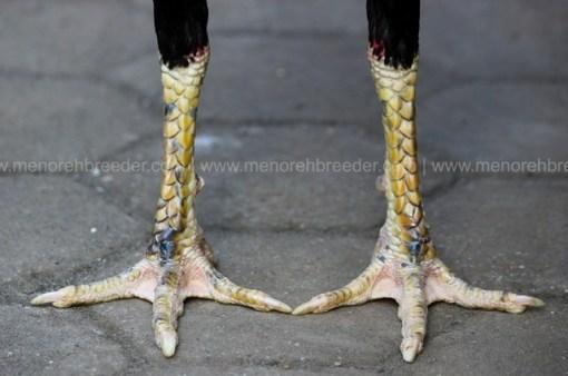 kaki ayam kering super.