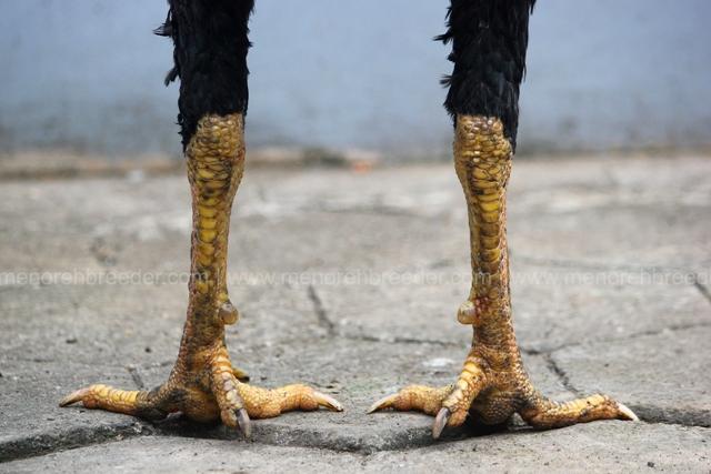 kaki pukul sadis