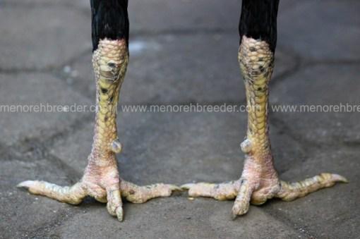 sisik kaki katuranggan