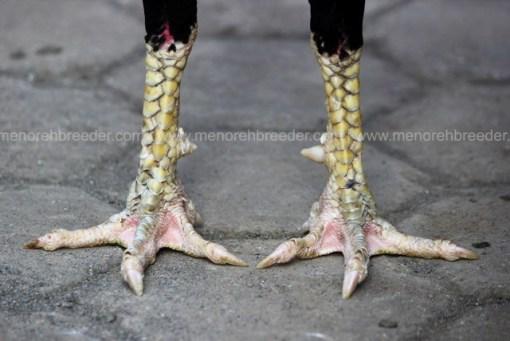 kaki kering pukul ko